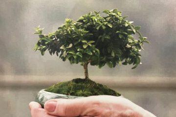 Klimaschutz konkret im Alltag - Wie geht das?