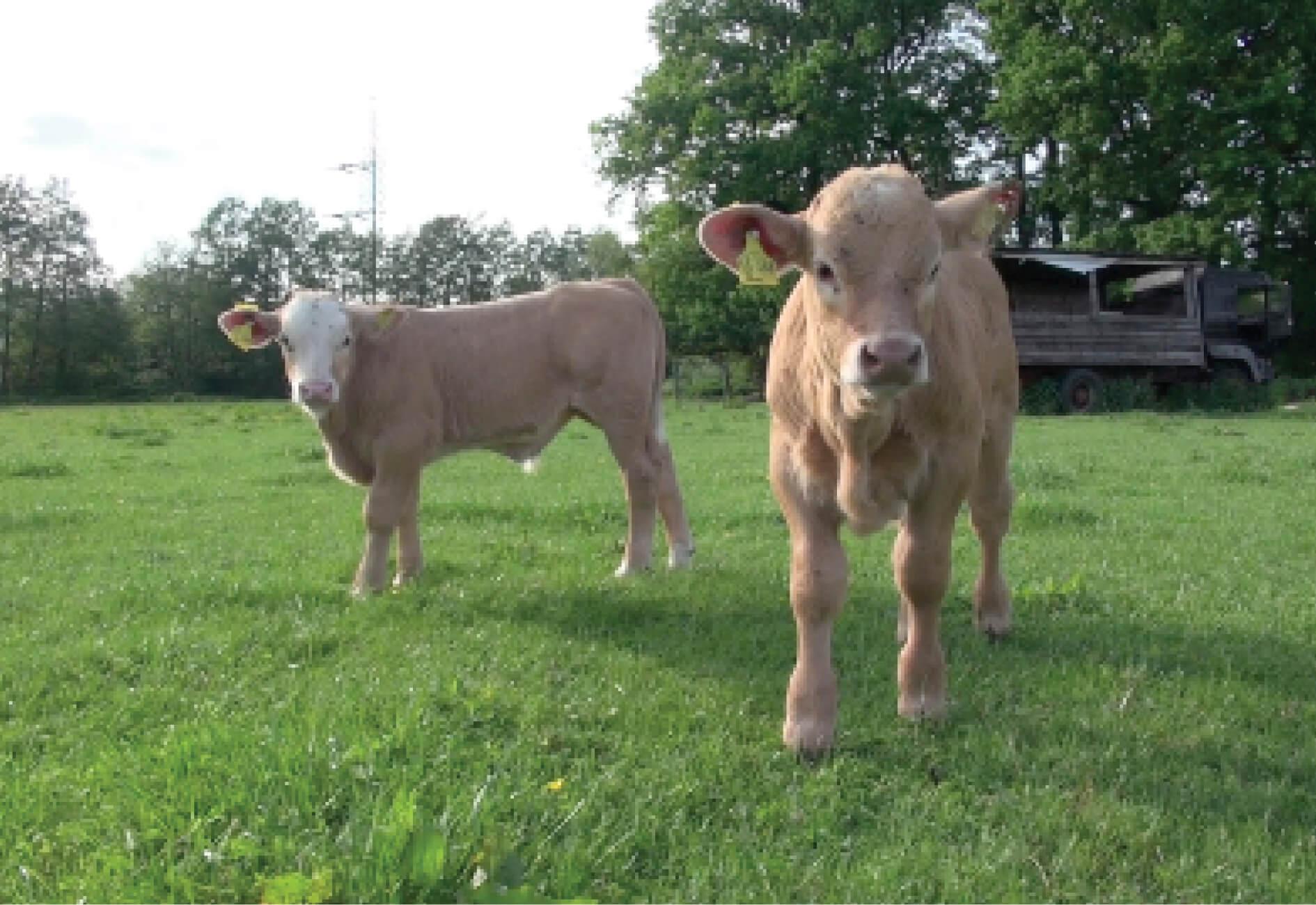 Kuhkuscheln & Tiergestützte Therapie