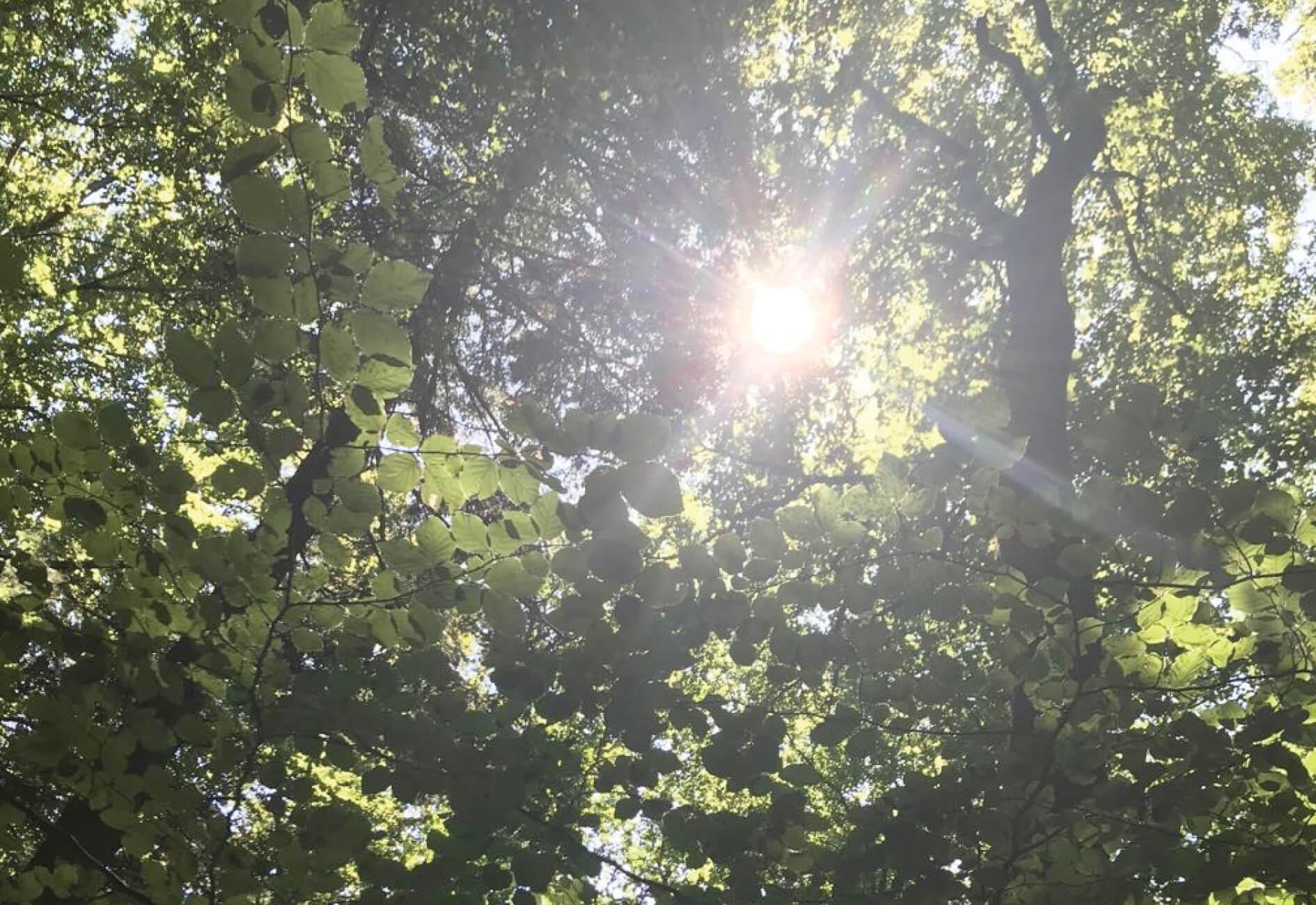 Ist Sonnen gesund?